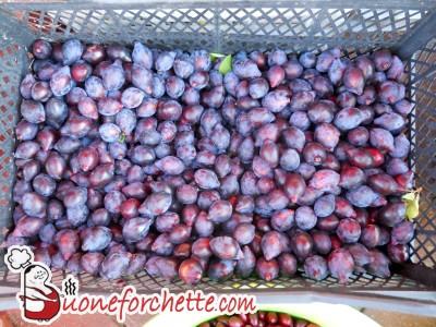 conosci questo frutto?